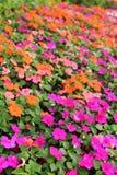 jaskrawy kwiaty Obrazy Royalty Free