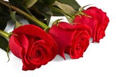 jaskrawy kwiaty wzrastali trzy zdjęcie royalty free