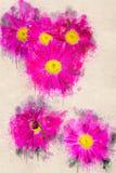 Jaskrawy kwitnienie menchii rumianek w ogródzie Akrylowy atrament Obraz Royalty Free