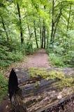 jaskrawy las Obrazy Royalty Free