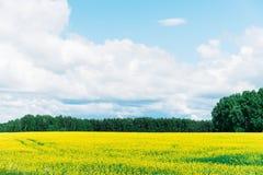Jaskrawy lato krajobraz z niebieskim niebem i chmurami, żółty kwiat obraz royalty free