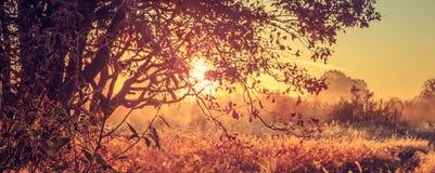 Jaskrawy lato wschód słońca przez gałąź drzewo na wiejskiej łące w ranku Panoramiczny widok złoty krajobraz żywy świt fotografia royalty free