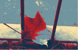 Jaskrawy liść klonowy na road& Fotografia Stock