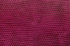 Jaskrawy magenta rzemienny tekstury tło Zbliżenie fotografia Fotografia Royalty Free