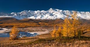 Jaskrawy malowniczy jesień krajobraz z górami zakrywać z śniegiem, lasem, żółtymi modrzewiami i pięknym jeziorem z odbiciami, obraz royalty free