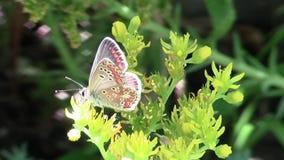 Jaskrawy motyl na kwiacie