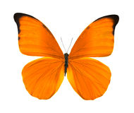 jaskrawy motyli pomarańczowy tropikalny Obraz Stock