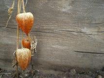 Jaskrawy na drewnianym Zdjęcia Stock