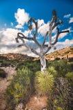 Jaskrawy nagi drzewo Obraz Stock