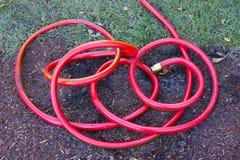 jaskrawy ogrodowego wąż elastyczny czerwień Zdjęcia Stock