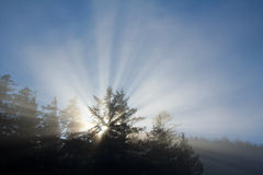 jaskrawy olśniewający światła słonecznego drzew whiterays Zdjęcie Royalty Free