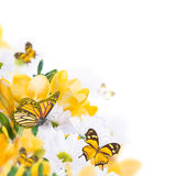 Jaskrawy pączka motyl i kalie Zdjęcia Stock