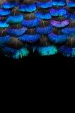 Jaskrawy piórka tło Fotografia Royalty Free