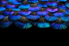 Jaskrawy piórka tło Fotografia Stock