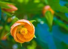 Jaskrawy piękny koloru żółtego kwiat Zdjęcia Stock