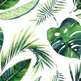 Jaskrawy piękny uroczy zielony ziołowy tropikalny cudowny Hawaii lata kwiecisty wzór monstera zwrotnika bananowa palma opuszcza ilustracja wektor