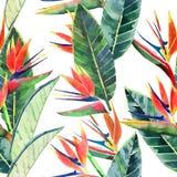 Jaskrawy piękny zielony kwiecisty ziołowy tropikalny uroczy Hawaii lata śliczny multicolor wzór tropikalny kolor żółty kwitnie na ilustracji