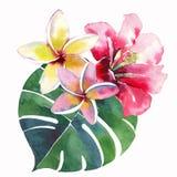 Jaskrawy piękny zielony kwiecisty ziołowy tropikalny uroczy Hawaii lata śliczny skład tropikalnych czerwieni menchii biały żółty  royalty ilustracja