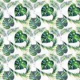 Jaskrawy piękny zielony ziołowy tropikalny cudowny Hawaii lata kwiecisty wzór zwrotnika monstera i palma opuszcza akwarelę ilustracja wektor