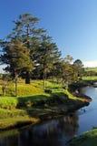 Jaskrawy pogodny ranek na Waitangi rzece Fotografia Royalty Free