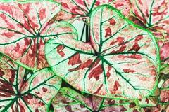 Jaskrawy roślina liść Obraz Stock