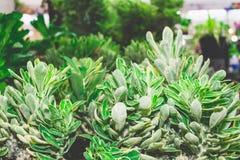 Jaskrawy roślina liść Fotografia Royalty Free