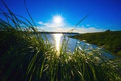Jaskrawy słońca jaśnienie przez trawy na bankach Ob rzeka obraz royalty free