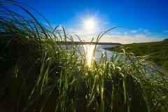 Jaskrawy słońca jaśnienie przez trawy na bankach Ob rzeka zdjęcie royalty free