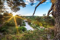 Jaskrawy słońce w ranku Obraz Stock