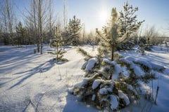 Jaskrawy słońce w zima lesie Fotografia Stock