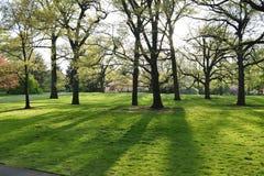 Jaskrawy słońce zaświeca jaśnienie przez cały drzewa w parku obrazy royalty free
