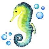 Jaskrawy Seahorse z bąbla Handdrawing akwareli ilustracją Wysoka Rozdzielczość Royalty Ilustracja