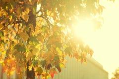 Jaskrawy sunburst przez obfitolistnego drzewa Obrazy Royalty Free