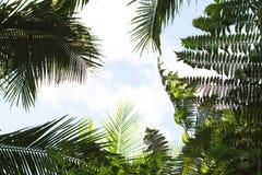 Jaskrawy tropikalny liść na nieba tle Coco drzewka palmowego wierzchołka sylwetka na niebie Zdjęcia Stock