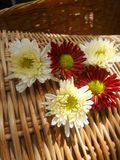 Jaskrawy światło na bielu i czerwieni kwiatach Fotografia Stock