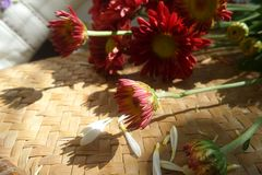 Jaskrawy światło na czerwień kwiatach i białym płatku Obrazy Stock