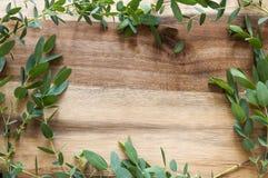 Jaskrawy - zieleń liści rama Fotografia Stock