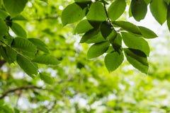 Jaskrawy - zieleń opuszcza tło tapetę zdjęcie stock