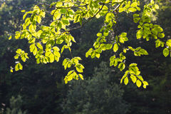 Jaskrawy - zieleń opuszcza tło tapetę fotografia stock