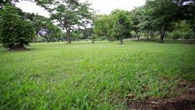 Jaskrawy - zieleni drzewa w parku HD 1920x1080 zbiory