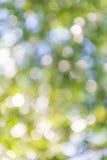Jaskrawy - zieleni i bielu plamy bokeh abstrakt zaświeca wiosna lasu b Fotografia Royalty Free