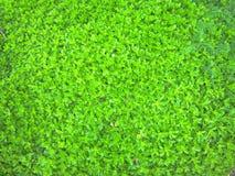 Jaskrawy - zieleni ziemi pokrywy tło Obrazy Stock