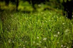 Jaskrawy - zielona trawa na tle z pięknym bokeh Zdjęcie Royalty Free