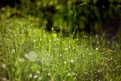 Jaskrawy - zielona trawa na tle z pięknym bokeh Obrazy Royalty Free