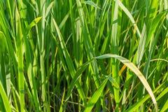 Jaskrawy - zielonego deseniowego kwiecistego tła trawy bujny bazy długi projekt Obraz Stock