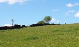 jaskrawy - zielonej trawy łąka zakrywająca w wiośnie kwitnie na zboczu z rozdrobnić starych kamiennej ściany drzewa i błękitnego  obraz stock