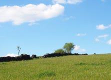 jaskrawy - zielonej trawy ??ka zakrywaj?ca w wio?nie kwitnie na zboczu z rozdrobni? starych kamiennej ?ciany drzewa i b??kitnego  fotografia stock