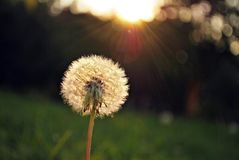 Jaskrawy - zielonej trawy tło świeży zielonej trawy pole Zdjęcia Stock