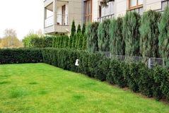 Jaskrawy - zielonej trawy tło świeży zielonej trawy pole Obrazy Royalty Free