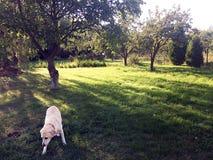 Jaskrawy - zielonej trawy tło świeży zielonej trawy pole Fotografia Stock